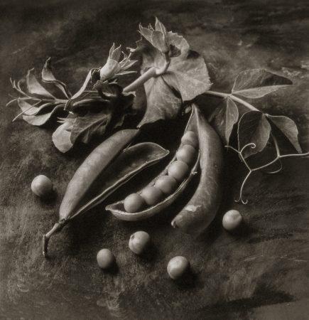 Sweet Peas by Cy DeCosse