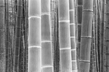 Colors of the Bamboo by DaeSoo Kim