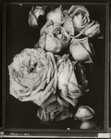 Heavy Roses, France, 1914 by Edward Steichen