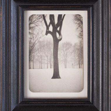 Tree, Central Park, 2007 by Jefferson Hayman