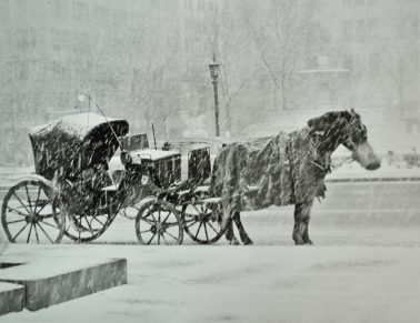 Horse and Buggy, 2/22/1959 by Nat Fein