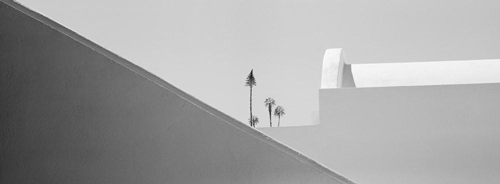 Four Flowers, 2006 by Brian Kosoff