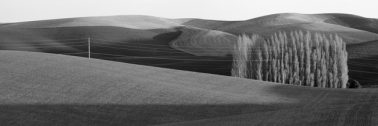 Palouse Trees, 2012 by Brian Kosoff