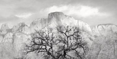 Zion Tree, 2005 by Brian Kosoff