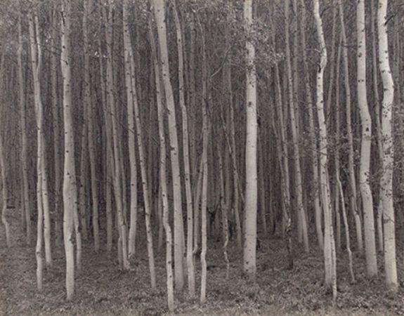 Aspen Grove, Aspen, CO, 1969 by George Tice