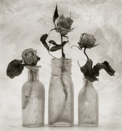Three Roses by Cy DeCosse