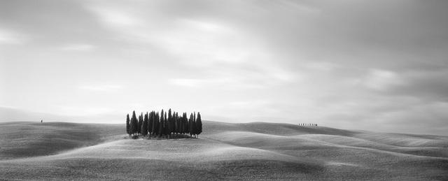 Tuscan Trees, 2007 by Brian Kosoff