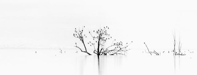 Bird Tree, 2005 by Brian Kosoff