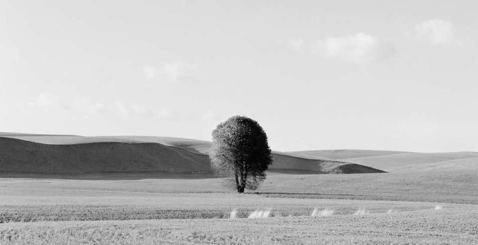 Lone Tree, 2012 by Brian Kosoff