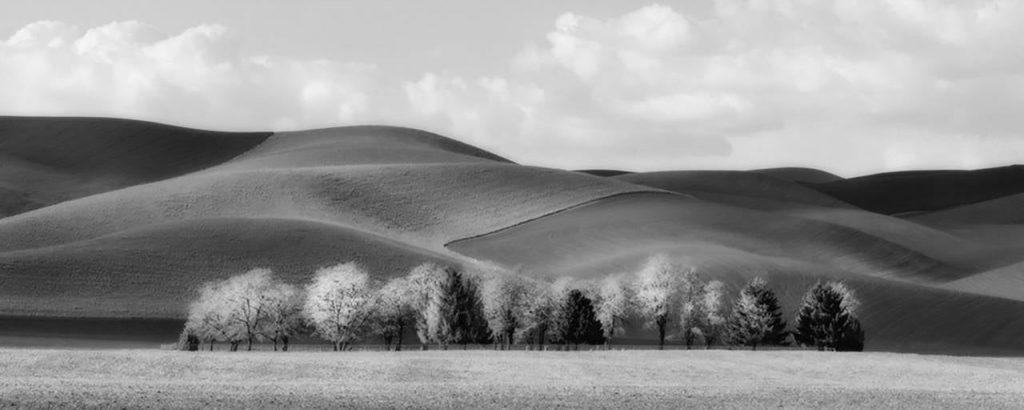 Prescott Trees, 2012 by Brian Kosoff