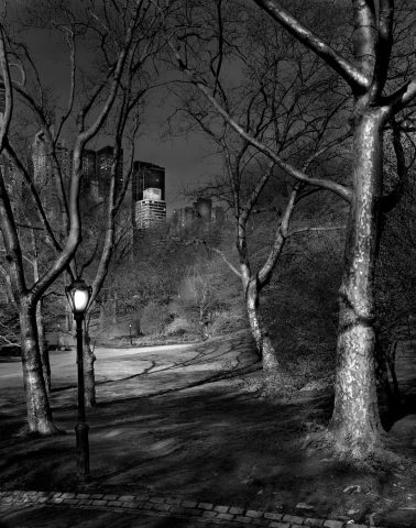 London Plane Trees, Deep in a Dream Central Park by Michael Massaia