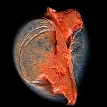 Broken Heart, Transmogrify II by Michael Massaia