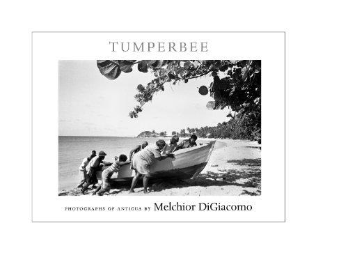 Tumperbee by Melchior DiGiacomo